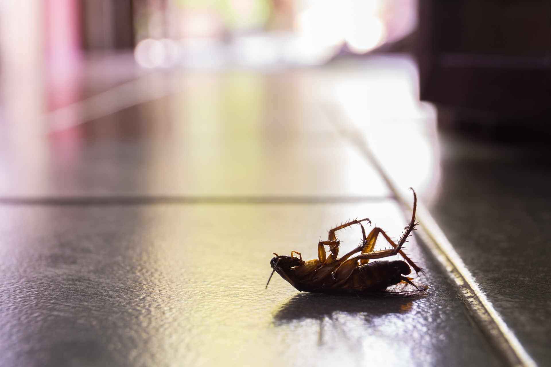 Cockroach Control, Pest Control in South Ockendon, RM15. Call Now 020 8166 9746