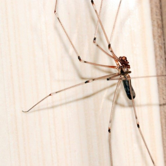 Spiders, Pest Control in South Ockendon, RM15. Call Now! 020 8166 9746